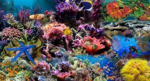 lặn san hô đi tour hòn tằm